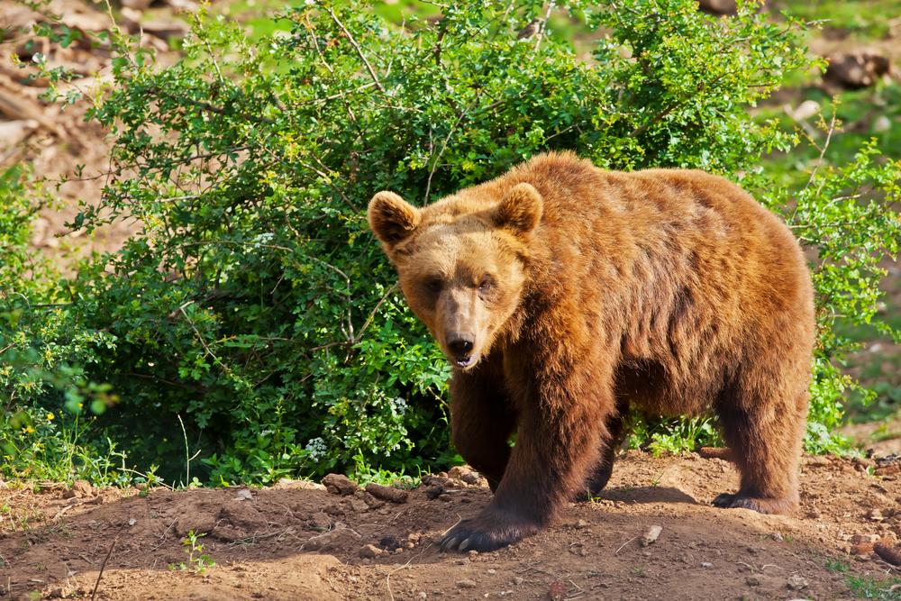 Schronisko dla niedźwiedzi w górach Welebit